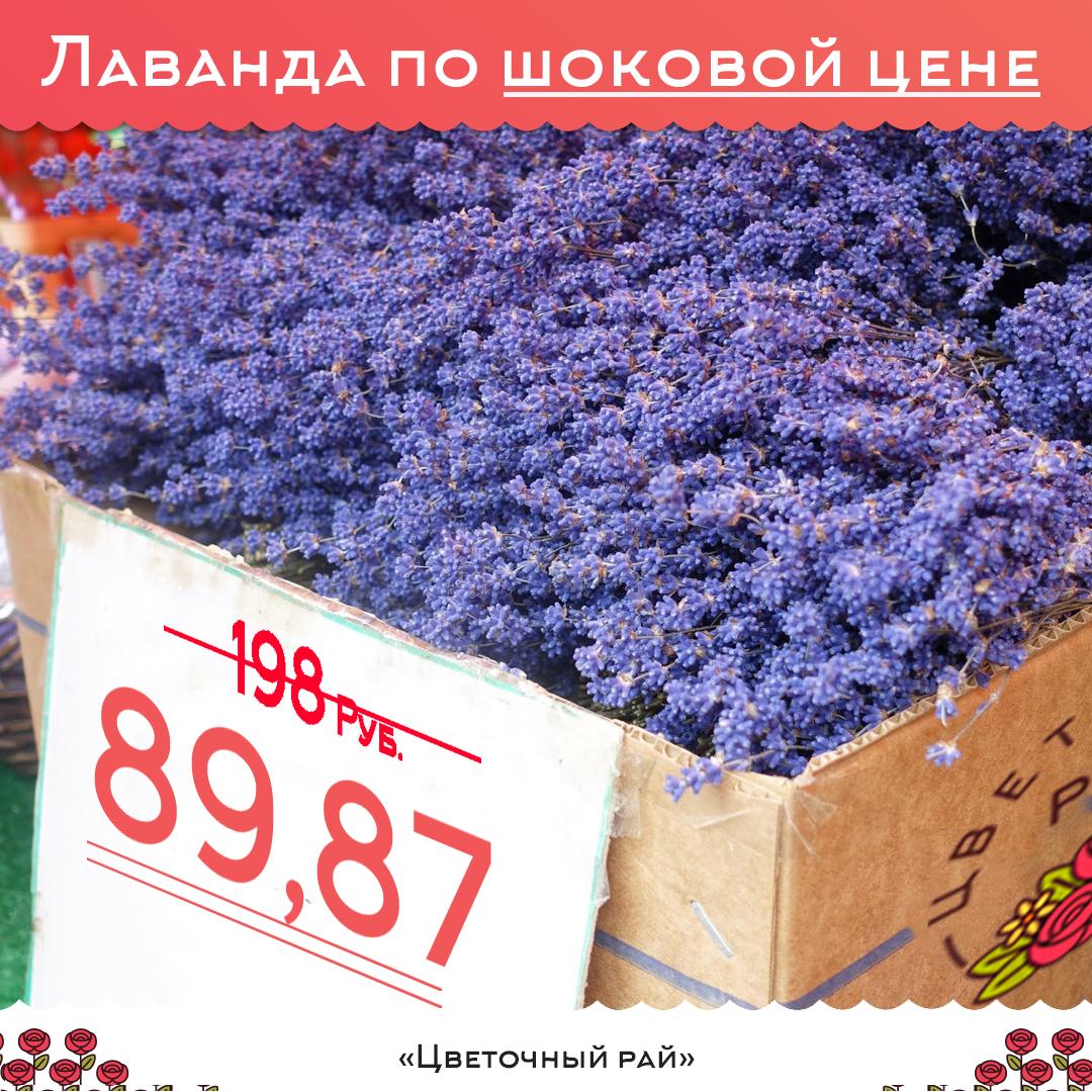 Lavandula dried dark blue (Лаванда) пучок от 89,87 ₽