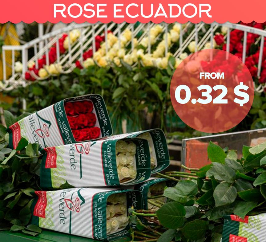 ROSE ECUADOR 40 cm. 0,32 $, Rosa Freedom 170 cm. 2 $