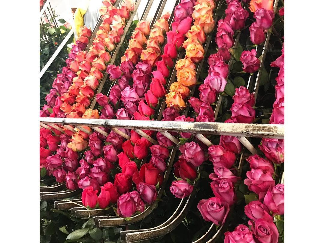 Роза микс. 40 см. 27,87 ₽, Роза микc 70 см. 48,87 ₽