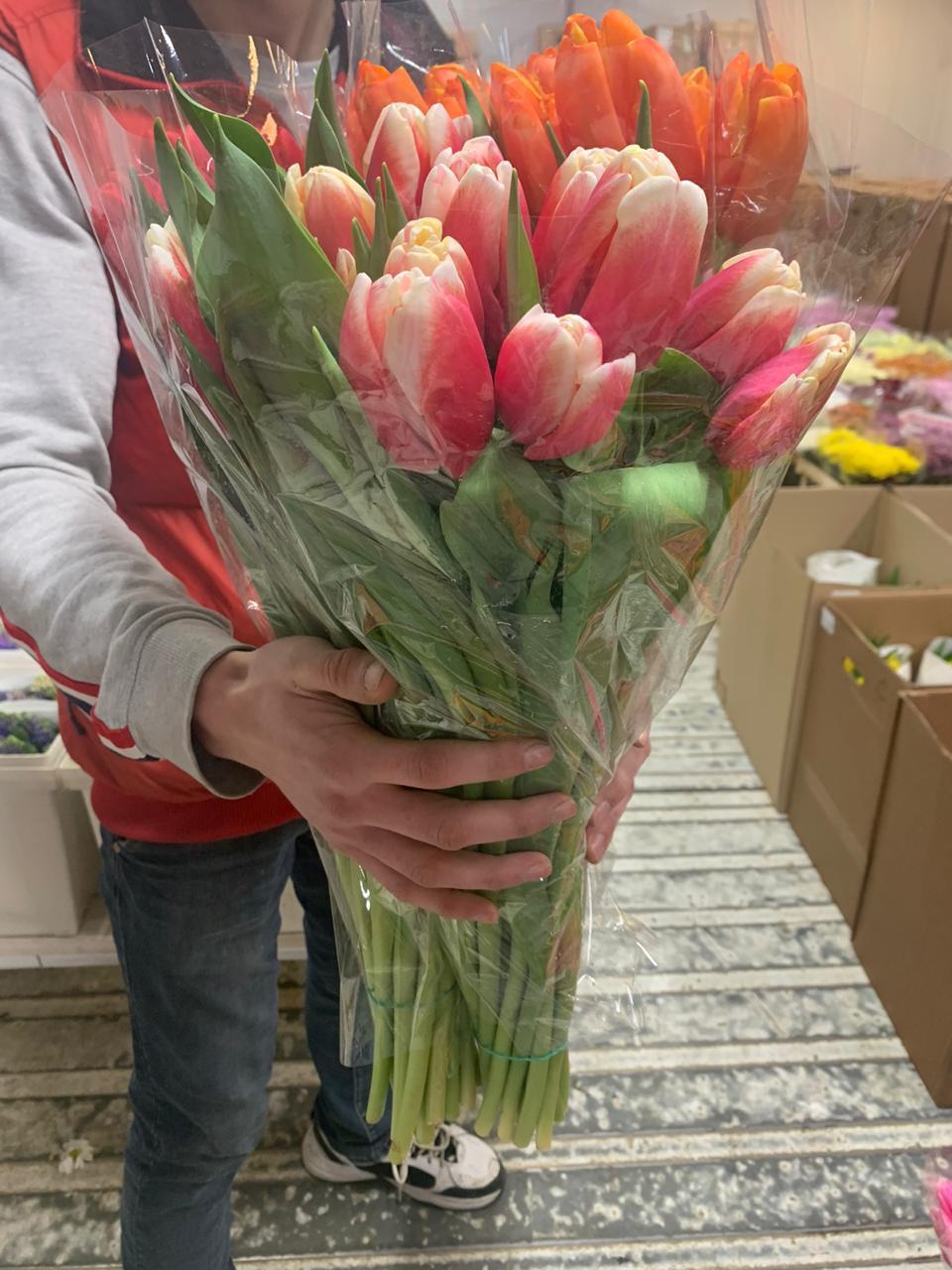 Тюльпаны к 8 марта от 23,87 ₽