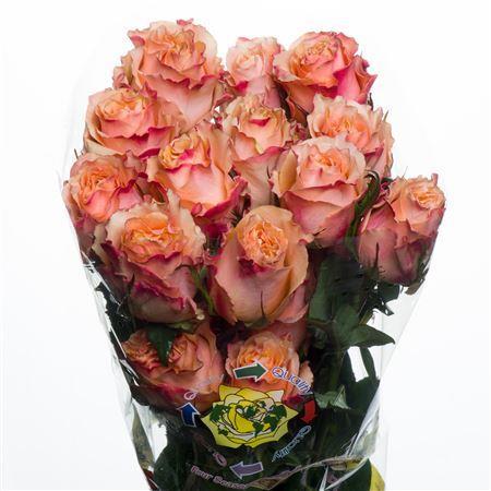 Rose Carpe Diem (Роза Карпе Дием) B50 Royal Flowers