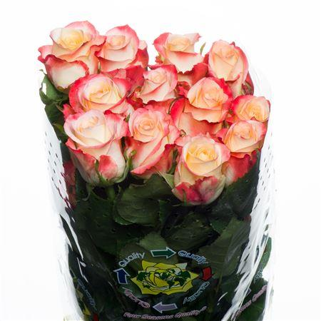 Rose Cabaret (Роза Кабарет) B60 Piaveri