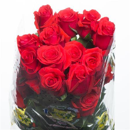 Rose Nina (Роза Нина) B60 Royal Flowers