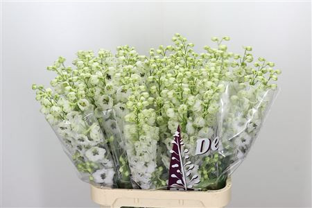 Delphinium rid white (Дельфиниум Рид Вайт) В80