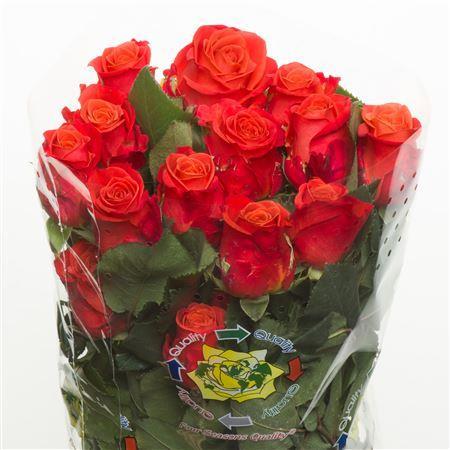 Rosa Orange Crush (Роза Оранж Краш) В50