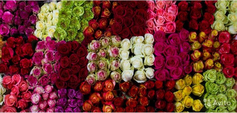 Rosa Mix (Роза Микс) В60 Rancho San Jorge