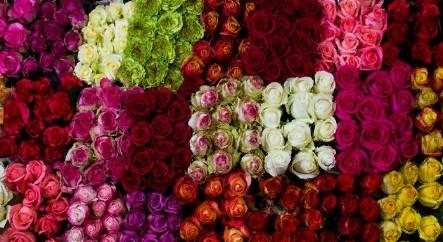 Rose mix Colors (Роза микс) B70 Royal Flowers