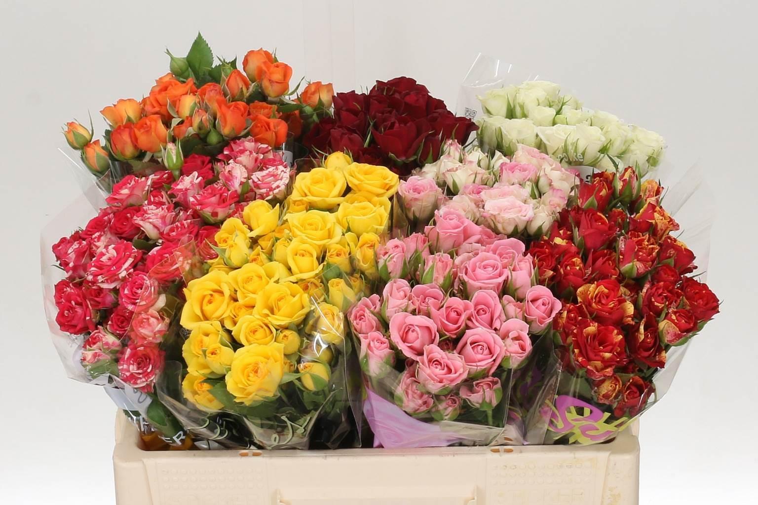 Rose Spray mix (Роза кустовая микс B40 Piaveri