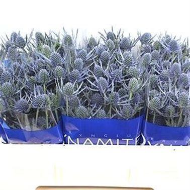Eryngium Blue Dynamite (Эрингиум Блу Динамит) В50