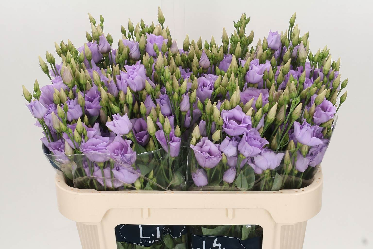 Eustoma Du Croma Lavender (Эустома Ду Крома Лавандер) В75
