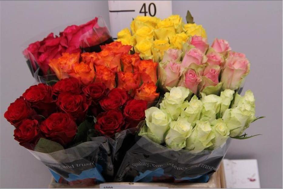 Rosa Mix (Роза Микс) В40 Laurel