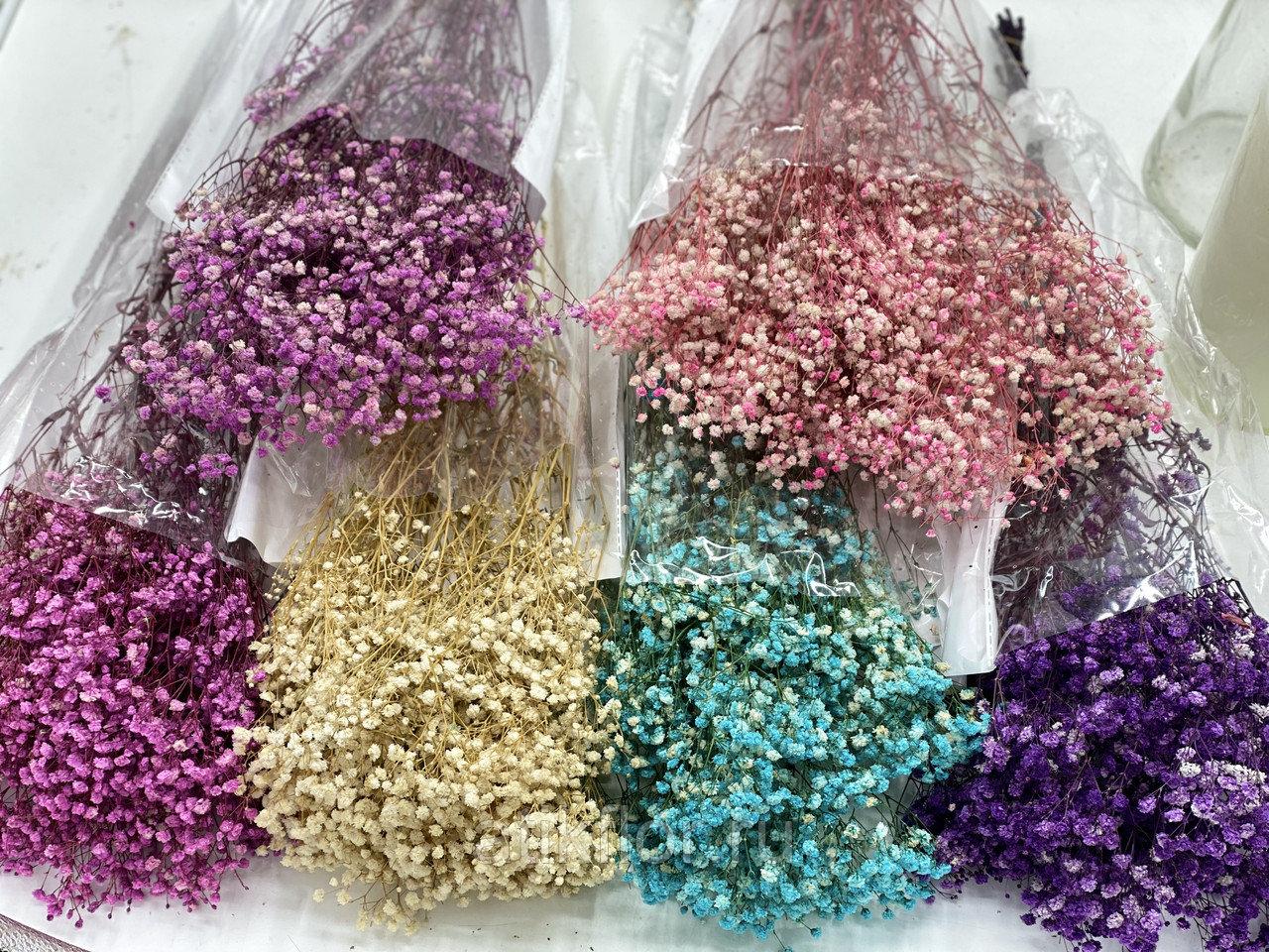 Gypsophila Tinted Mix ( Гипсофила Тинтед Микс) Violeta flowers