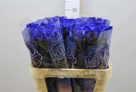 Rosa Gr Vendela Paint Blue (Роза Вендела Гр паинт блу) В80