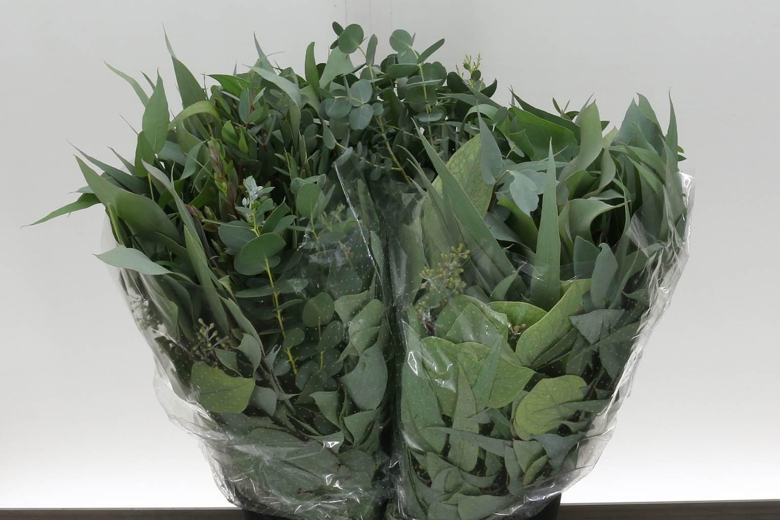 Eucalyptus mix (Эвкалипт Микс) В70