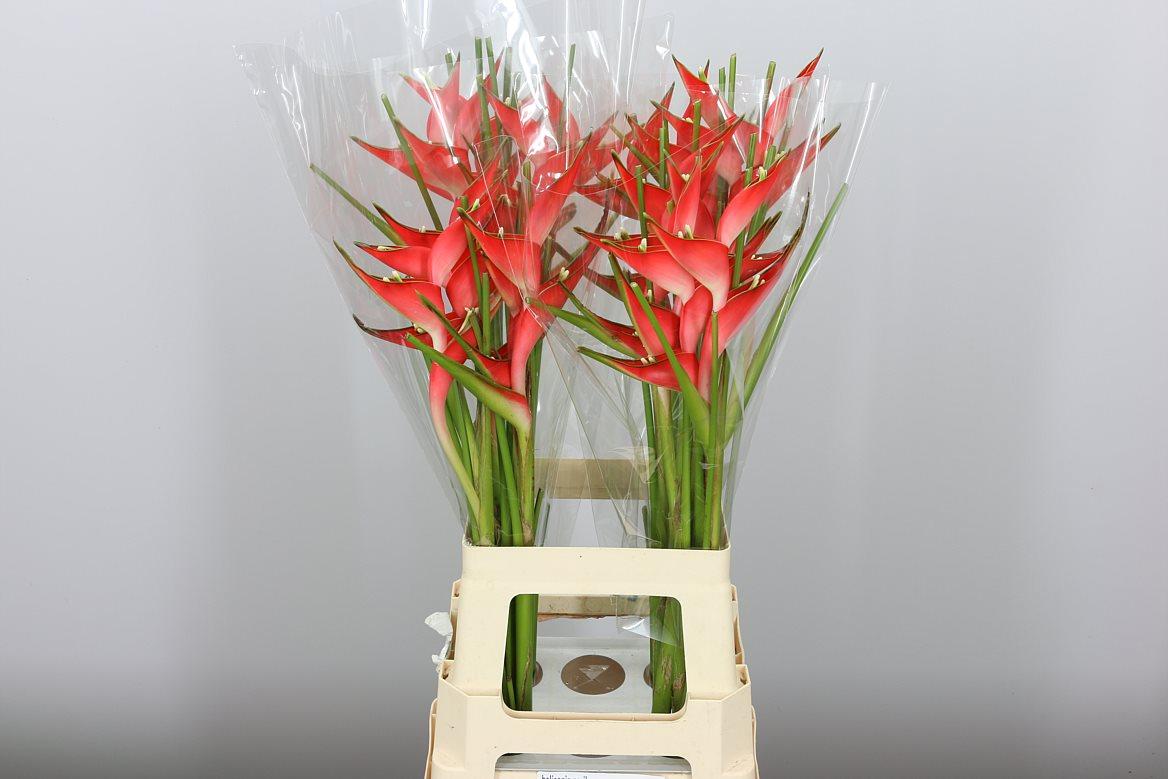 Купить живые экзотические цветы оптом