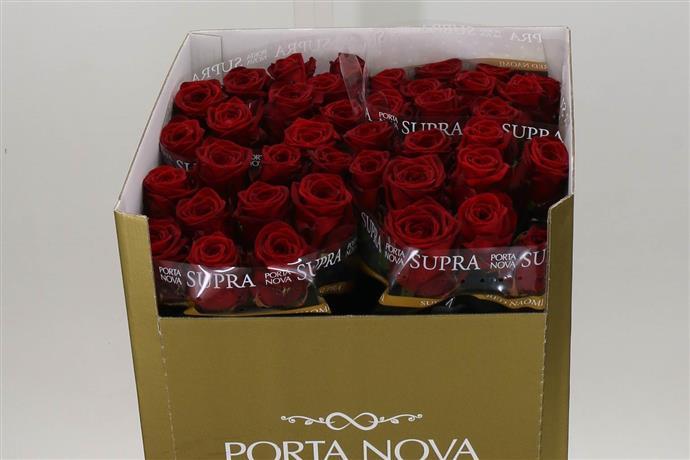 Rosa Gr Red Naomi (Роза Гр Ред Наоми) В80