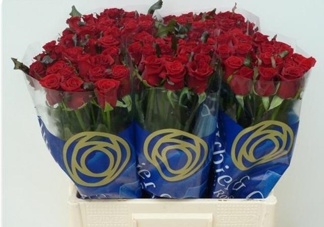 Rosa Gr Prestige (Роза Гр Престиж) В80