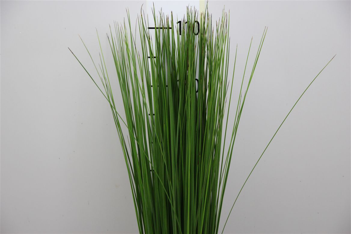 Steelgrass (Стилграсс) В120