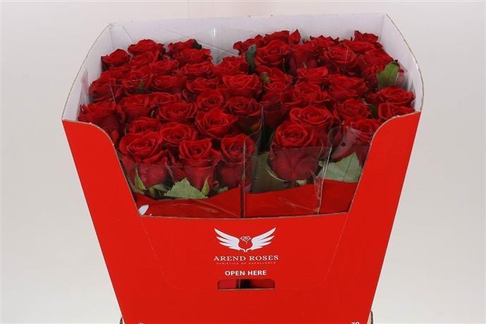 Rosa Gr Red Eagle (Роза Гр Ред Эгл) В50