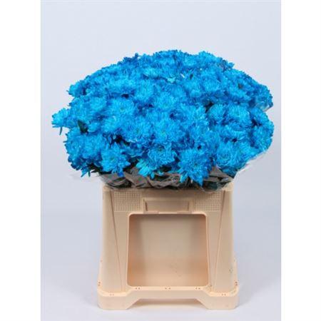 Chrys. tr. Zembla Blue (Хр. куст. Зембла Блу) В70
