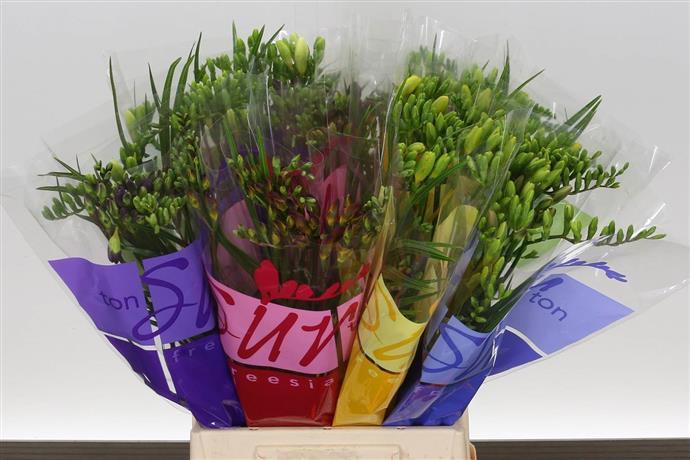 Freesia single Mixed (Фрезия Сингл Миксд) В40