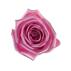 Rosa Aqua Satin (Роза Аква Сатин) В80