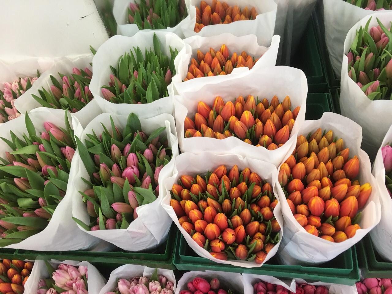 Тюльпаны микс Экстра (Tulips mix Extra) 45 см +, пр-ва Галантус