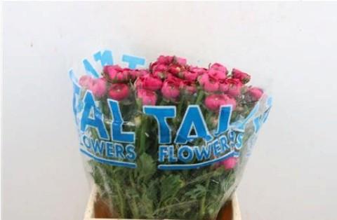 Ranunculus Hot Pink (Ранункулюс хот пинк) В40