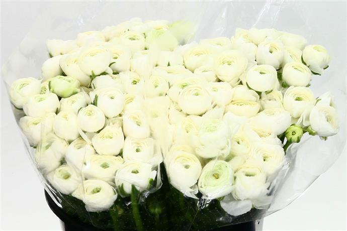 Ranunculus elegance white(Ранункулюс элеганс вайт) В50