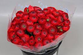 Ranunculus Cloony Red (Ранункулюс Клуни Ред) В40