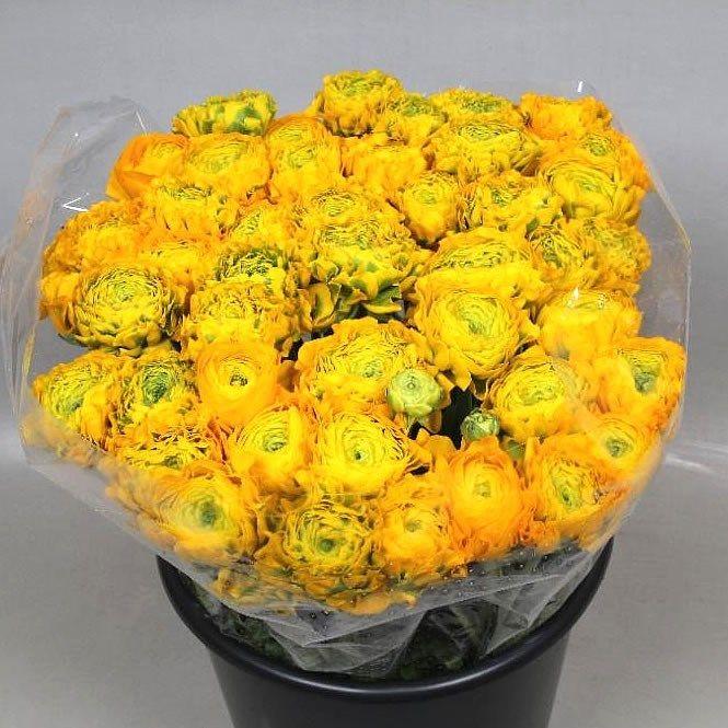 Ranunculus Cloony Pon Pon Trilly (Ранункулюс Клуни Пон Пон Трилли) В40