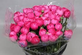 Ranunculus Cloony Hot Pink (Ранункулюс Клуни Хот Пинк) В40