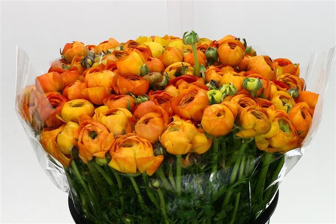 Ranunculus Orange (Ранункулюс Оранж) В40