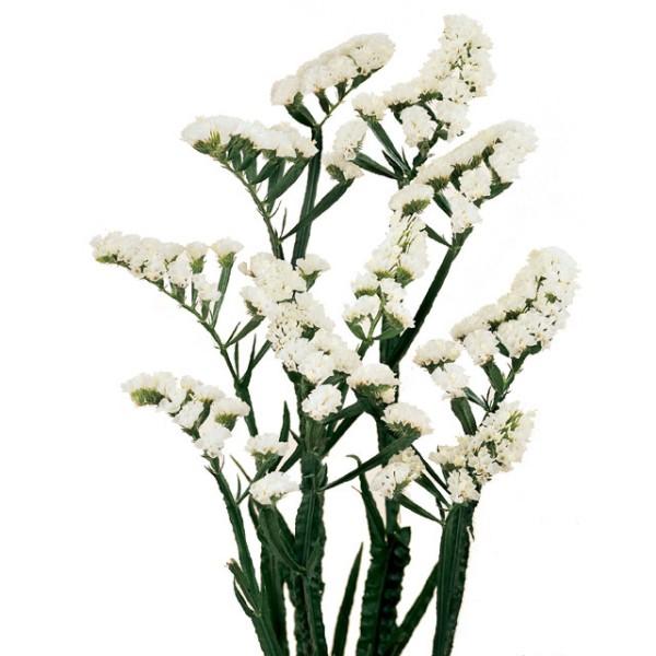 Купить цветы в старлайте подарок на юбилей дедушке от внука