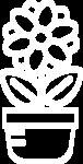 Комнатные<br />растения