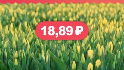 Тюльпаны к 8 марта за 18,87 ₽