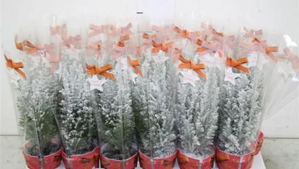 Свежее предложение на комнатные растения