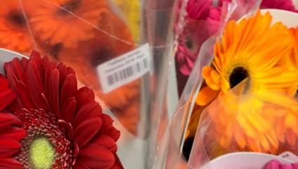 Хризантема куст 31,87 ₽ , Rosa MIX ЭКВ 50 cm 38,87 ₽