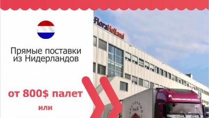 Бережная доставка, Вашей цветочной продукции по РФ и СНГ, из любой точки мира.