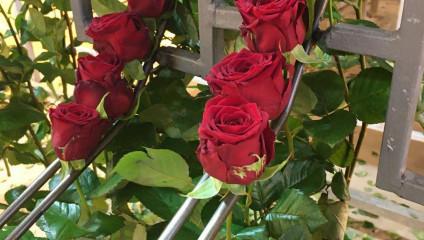 Роза РФ 29,87 ₽, Роза РФ 70 см. 53,87 ₽