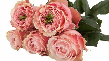Роза SUBATI mix от 23,87 ₽ , Роза GARDEN mix от 39,87 ₽