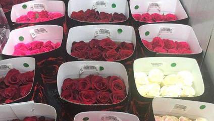Выиграй коробку Розы Эквадор от плантации HAYAT ROSESE