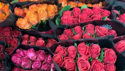Хризантема куст 23,87 ₽ , Rosa MIX ЭКВ 50 cm 43,87 ₽  ⠀