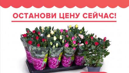 Бронируйте цветы на День Матери!