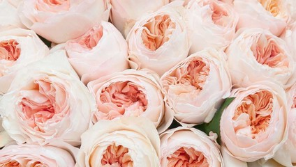 Роза David Austin 50 см. 72,86 ₽, Роза Garden Rose 50 см. 134,56 ₽