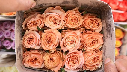 Роза Эквадор 40 см. 33,78 ₽, Роза 60 см. 45,87 ₽