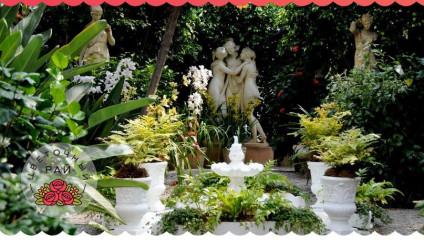 Что посадить в тенистом саду