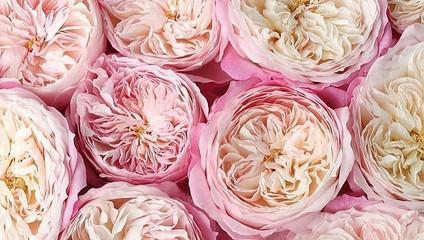 Роза Эквадор 50 см. 46,87 ₽, Роза Эксплорер 47,87 ₽