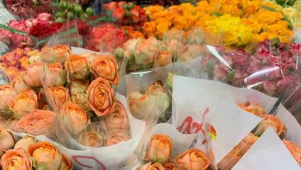 Хризантема куст 29,87 ₽ , Rosa MIX ЭКВ 50 cm 43,87 ₽