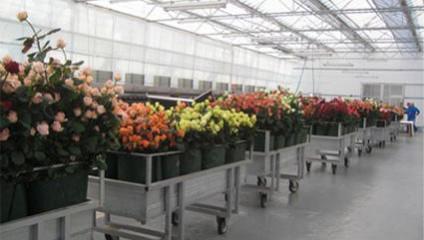Тепличный комплекс совместно с компанией Цветочный Рай, предлагает Розу, Герберу.